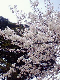 image/aniblog-2006-03-29T16:34:05-1.jpg